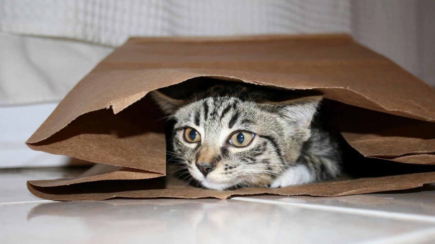 Photo of Gatos podem reconhecer seus nomes, de acordo com um novo estudo – Quartz