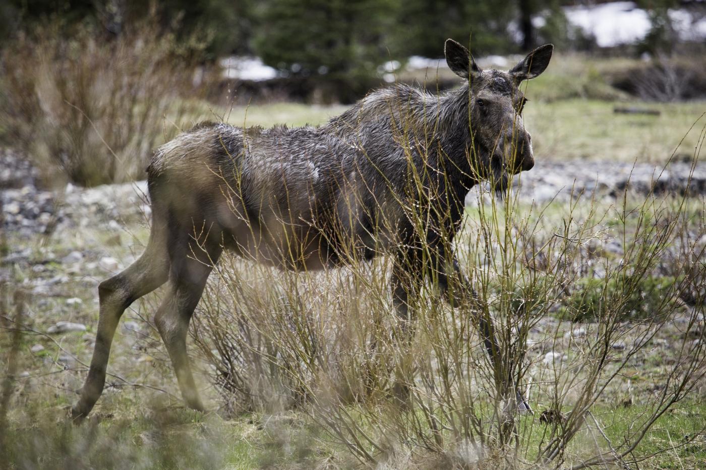 Photo of O viaduto da vida selvagem em Utah atrai intrusos indesejados: humanos – quartzo