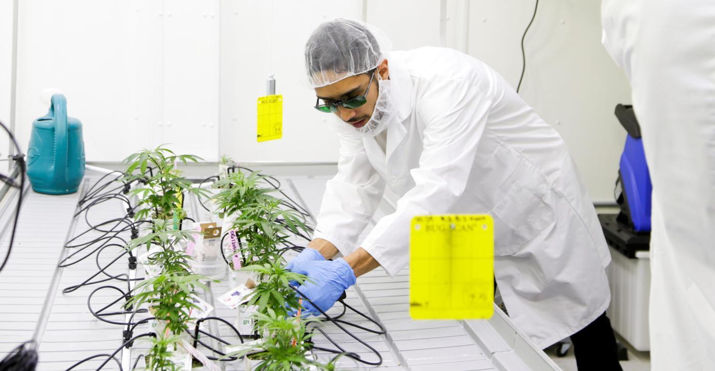 Photo of Aqui está o currículo de graduação em ervas da Universidade Estadual do Colorado: Quartzo