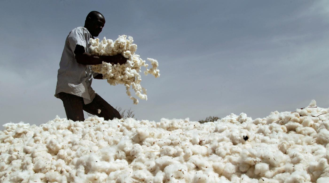 Foto de Algodão geneticamente modificado da Monsanto fica em Burkina Faso – Quartz Africa