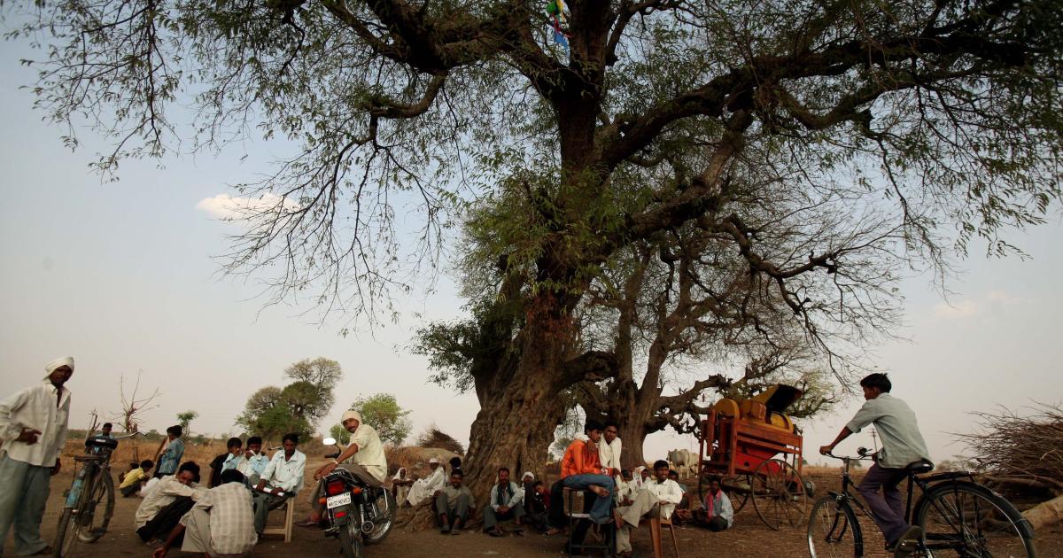 Foto de Etiqueta do patrimônio para preservação de árvores antigas em Maharashtra, Índia – Quartzo
