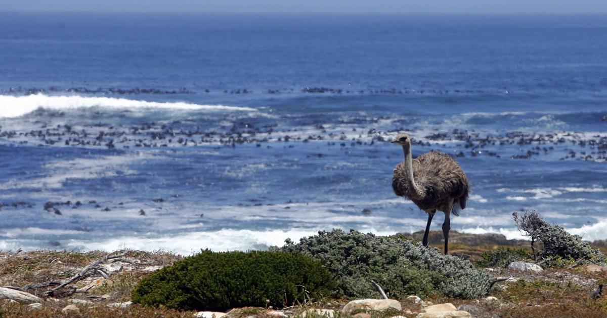 Foto de O Oceano Atlântico Sul já foi conhecido como Oceano Etíope – Quartzo África