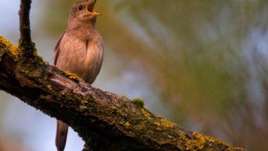 Foto de A popularidade da observação de pássaros vai além da pandemia – Quartzo