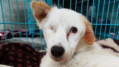 Foto de Proibição do CDC vai piorar a crise da raiva de cães vadios na Índia – Quartz India