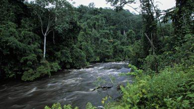 Foto de Noruega paga Gabão para preservar e conservar a floresta tropical – Quartz Africa